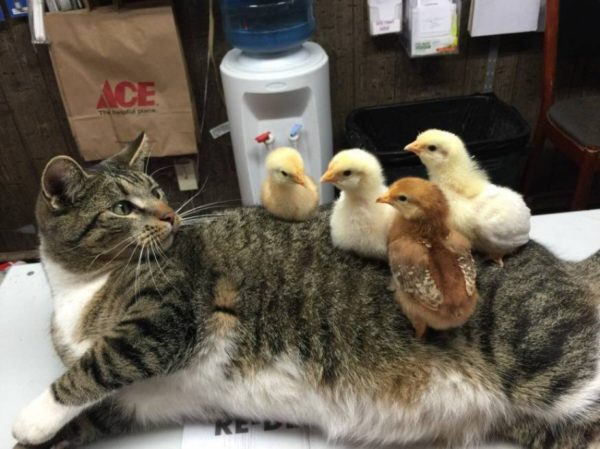 Chicks on cat via The Chive